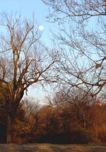 Moon above Sacred Heart