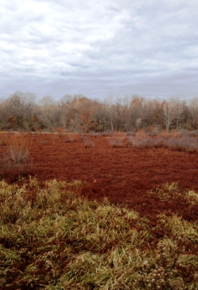 A very dry wetland